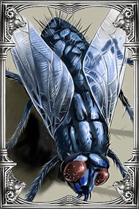 Ragnarok-online-beta-chonchon-card.png